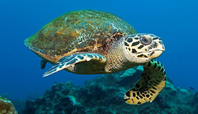 Turtle-Trip-3-Main